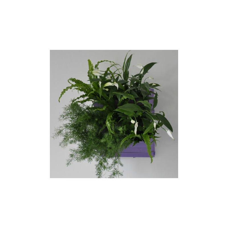 Tableaux v g tal potager vertical jardin vertical pas for Mur vegetal interieur pas cher