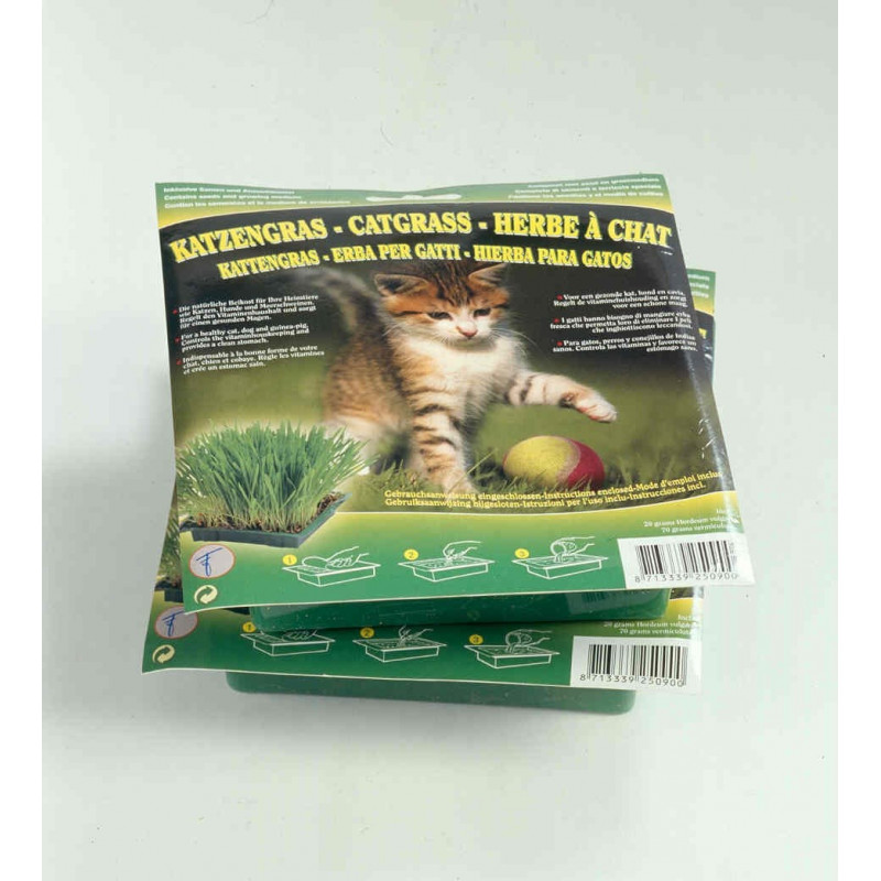 Vente herbe chat pas cher culture des graines herbes - Herbe a chat graine ...