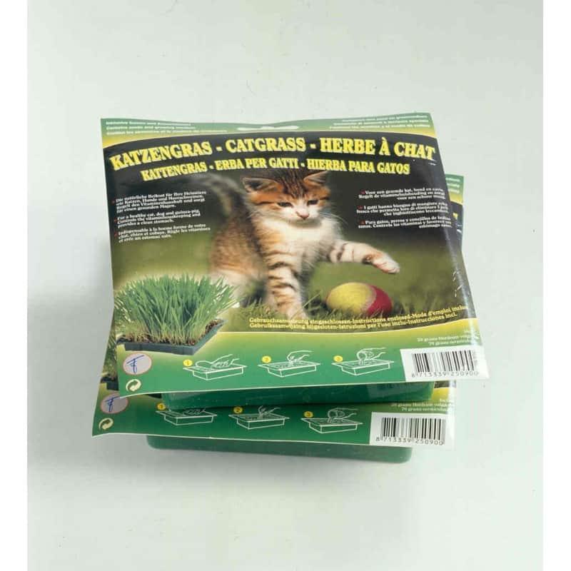 vente herbe chat pas cher culture des graines herbes chat. Black Bedroom Furniture Sets. Home Design Ideas