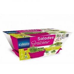 Jardinière Salades Fraîcheur