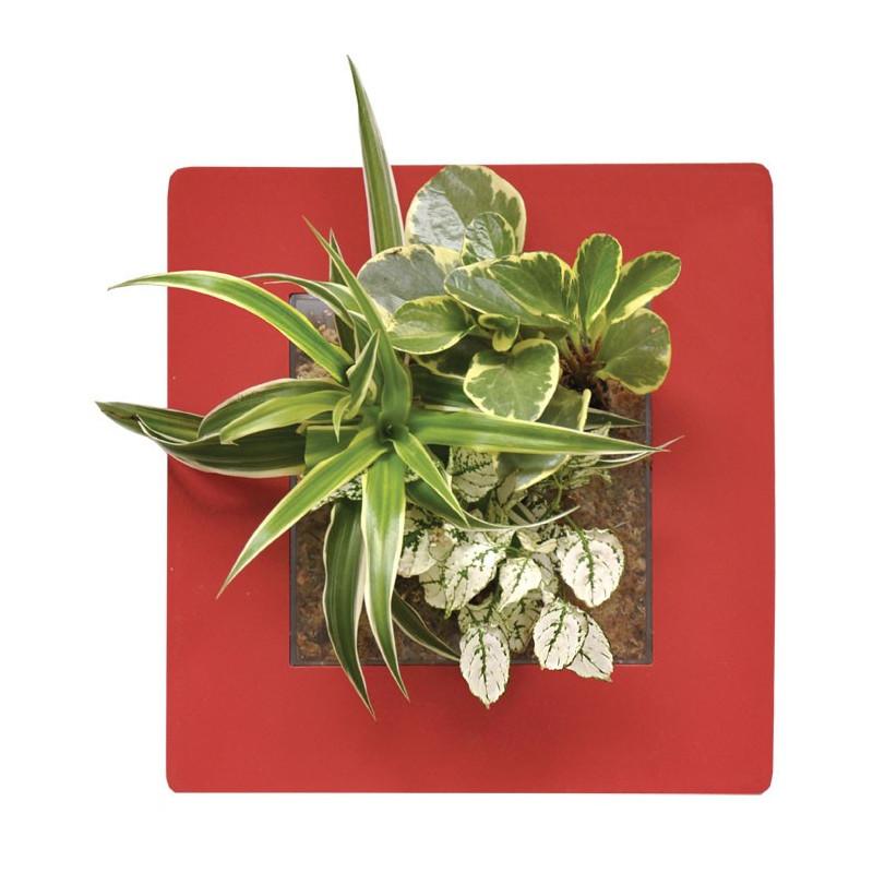 Acheter tableau v g tal cadre v g tal pas cher cadre for Plante vegetal