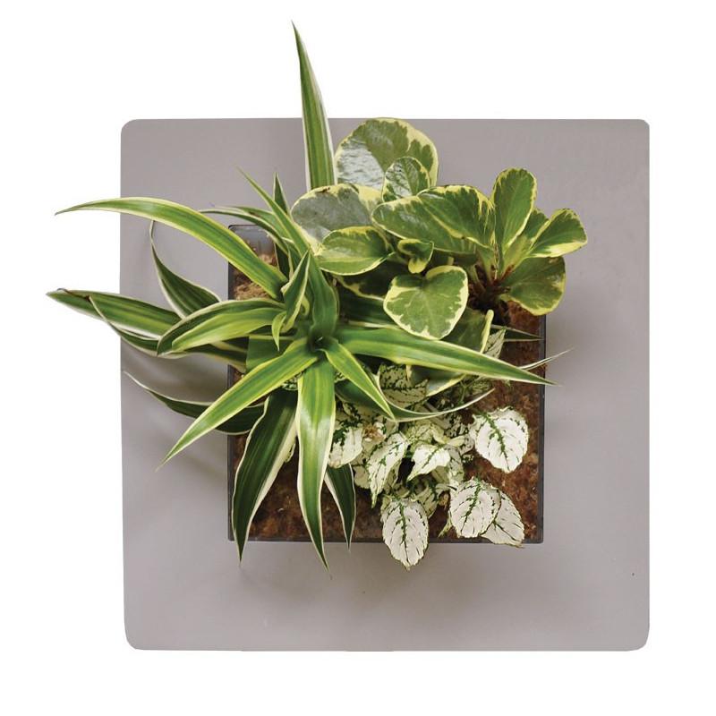 Acheter tableau v g tal gris cadre v g tal pas cher Tableau vegetal mural pas cher