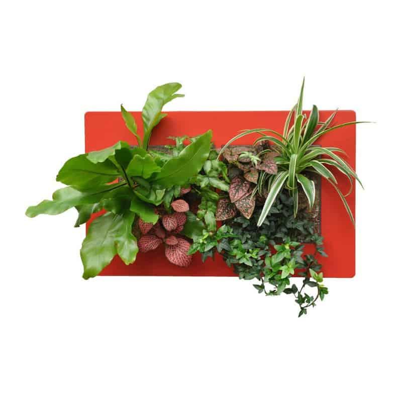 Acheter grand cadre v g tal pas cher cadre v g tal mural - Cadre vegetal mural ...