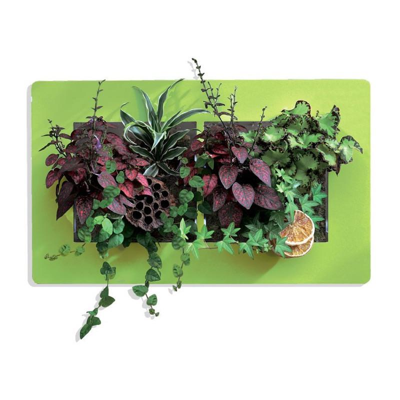 Cadre v g tal avec plantes grasses ikea tableau de cadre for Cadre mural plantes
