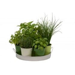 Plateau d'herbes aromatiques