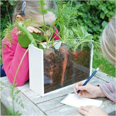 Kit croissance des plantes