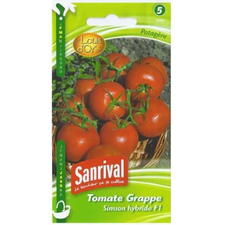 Graines de tomate en grappe