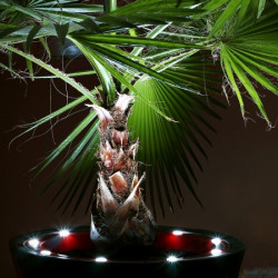 Pot de fleur design à LED Open S 60 cm