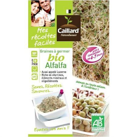 Alfalfa -Luzerne à germer