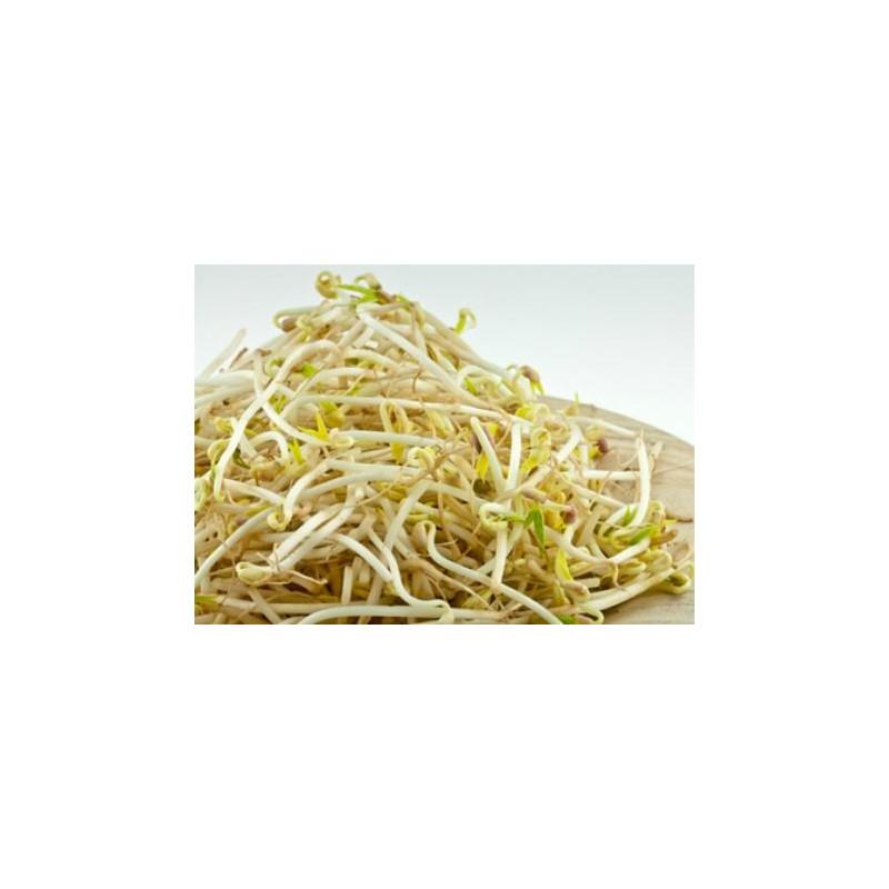 Haricot Mungo vert à germer bio