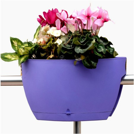Mini Garden M Violet