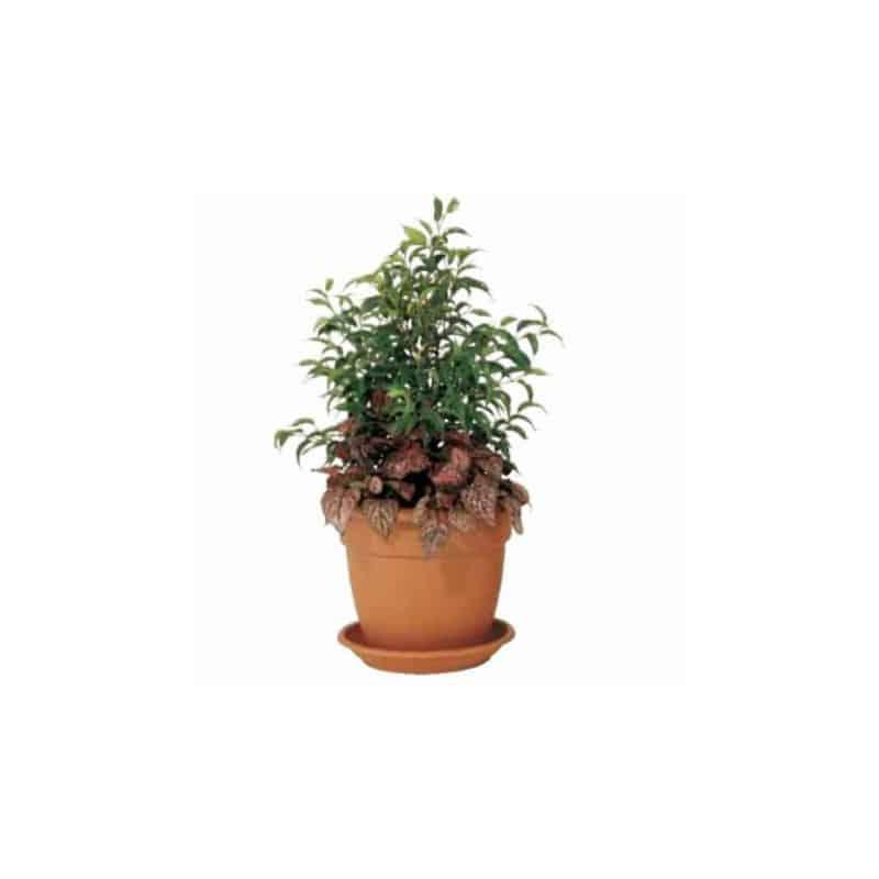 Gros Pot De Fleur En Plastique Grand Pot De Fleur Grand Pot De