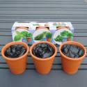 Herbes aromatiques et pots en terre cuite
