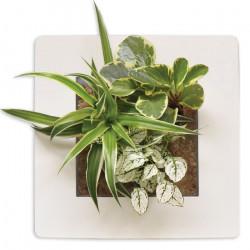 Cadre Végétal Mural - Blanc