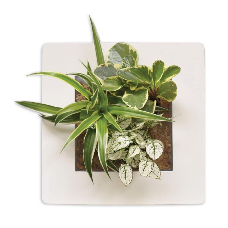 Acheter Tableau Végétal Blanc Cadre Végétal Pas Cher