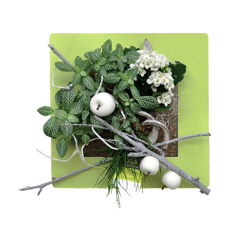 Acheter Cadre Végétal Pas Cher Cadre Végétal Mural Vert