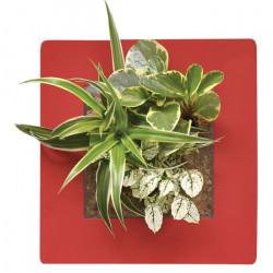 Cadre Végétal Mural - Rouge Coquelicot