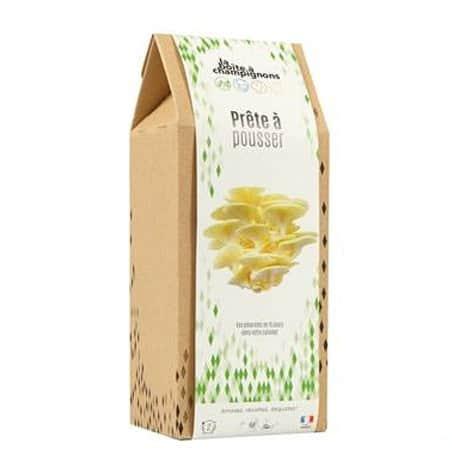 Champignons à faire pousser en boite - Pleurotes jaunes