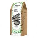 Kit Champignons à faire pousser en boite - Pleurotes gris