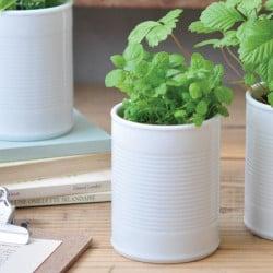 Menthe en pot céramique
