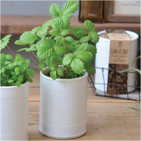 Fraises des bois Pot Céramique