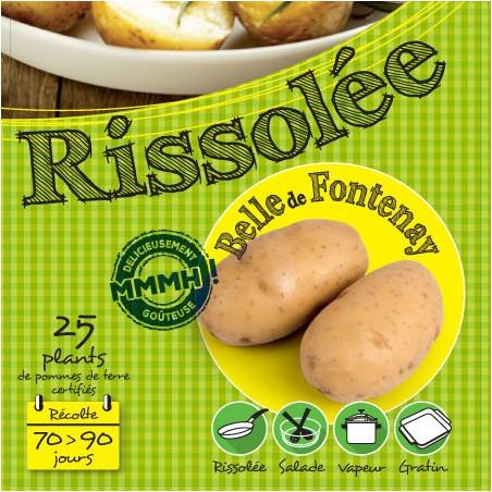 Belle de Fontenay 25 Plants de pomme de terre