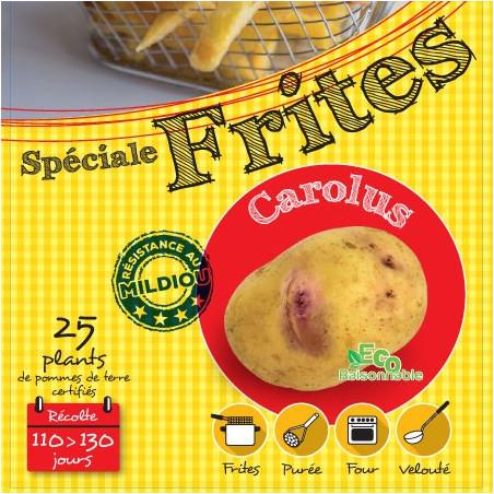 Carolus 25 Plants de pomme de terre