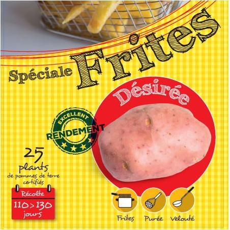 Désirée (Chair rose) 25 Plants de pomme de terre