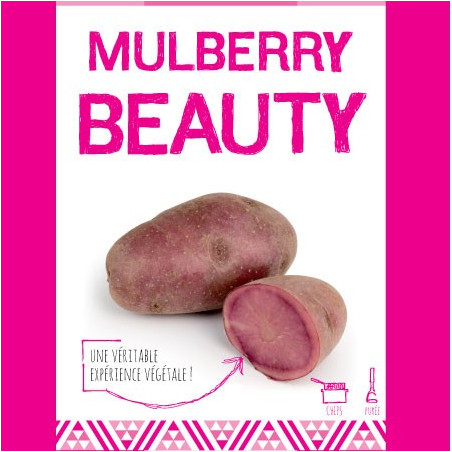 Mulberry Beauty (Chair Rose) 25 Plants de pomme de terre