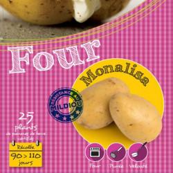 Monalisa 25 Plants de pomme de terre