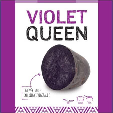 Violet Queen (Chair Violette) 25 Plants de pomme de terre