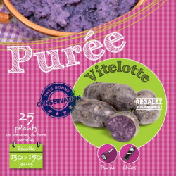 Vitelotte (Chair Violette) 25 Plants de pomme de terre