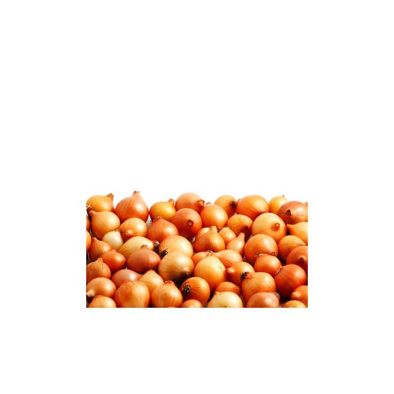 Jaune paille des vertus Bulbes d'Oignons a repiquer