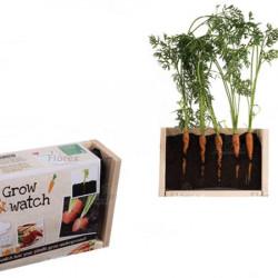 Kit Carottes à planter et à observer