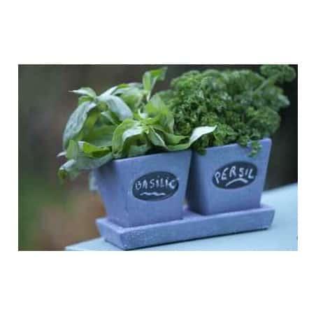 Duo d'herbes aromatiques et pot céramique