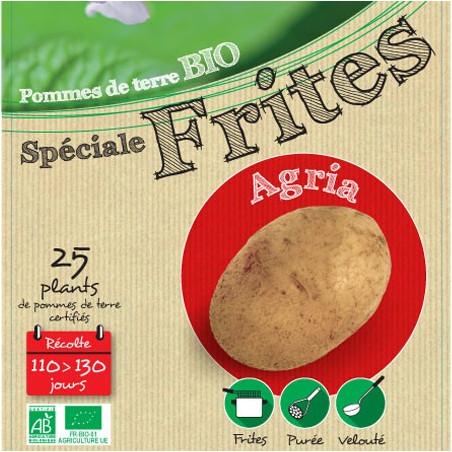 Agria Biologique 25 Plants de pomme de terre
