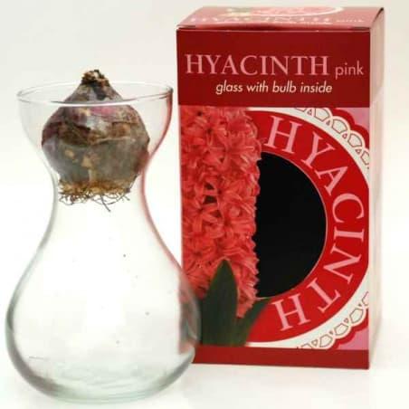 Jacinthe rouge et vase