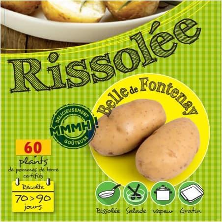 Belle de Fontenay 60 Plants de pomme de terre
