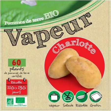 Charlotte Biologique 60 Plants de pomme de terre