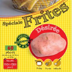 Désirée (Chair rose) 60 Plants de pomme de terre