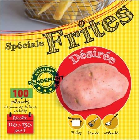 Désirée (Chair rose) 100 Plants de pomme de terre