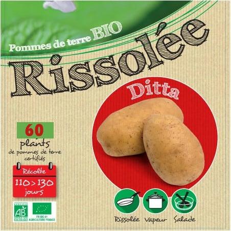 Ditta Biologique 25 Plants de pomme de terre