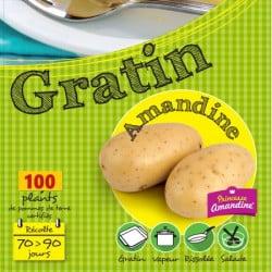 Amandine 100 Plants de pomme de terre