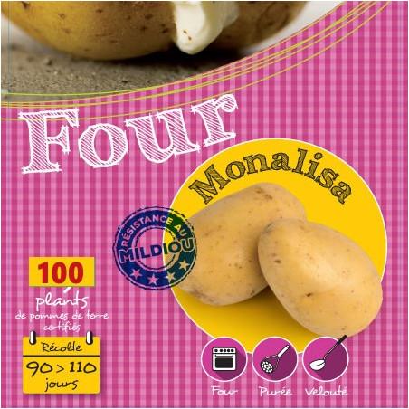 Monalisa 100 Plants de pomme de terre