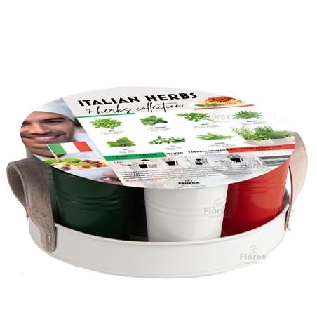 Plateau 7 Herbes Aromatiques Italiennes