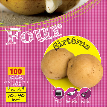 Sirtéma 100 Plants de pomme de terre