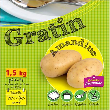 1,5 kg de Plants de pomme de terre Amandine