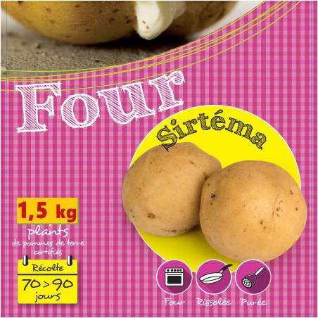 1,5 kg de Plants de pomme de terre Sirtéma