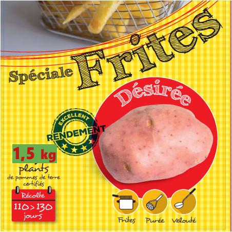1,5 kg de Plants de pomme de terre Désirée (Chair rose)