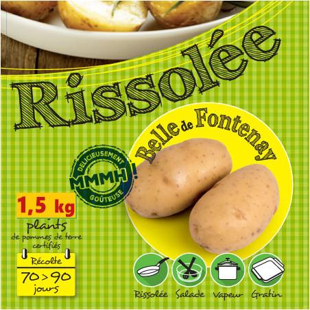 1,5 kg de Plants de pomme de terre Belle de Fontenay
